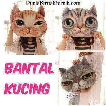 testi-bantal-kucing1
